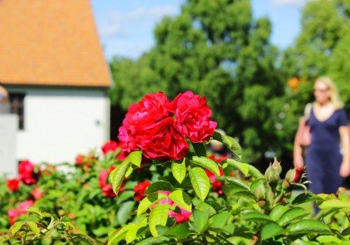 Цветочный туризм